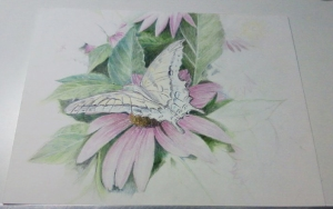 Butterfly in progress 101 Copyright © 2009 Michael and Sandra Schwab